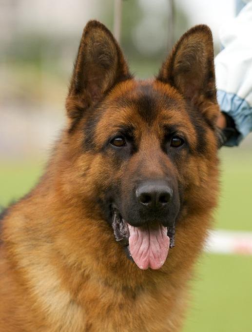 красивые породы собак фото с названиями